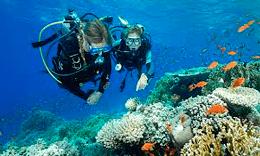Discover Scuba Diving Course