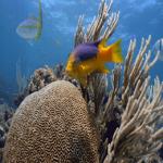 Local Diving
