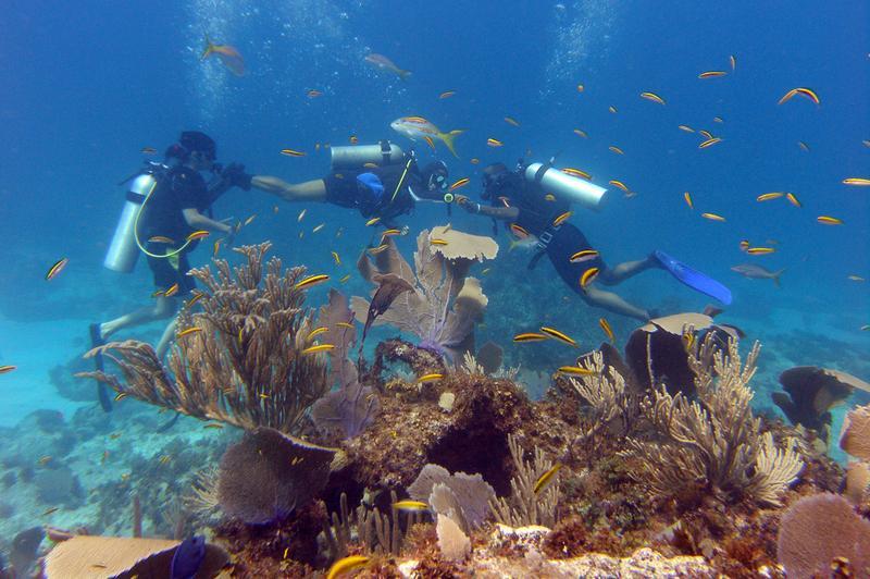 Catalina Aquarium